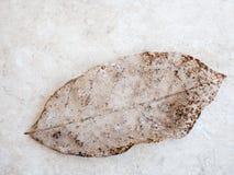 Textura seca do detalhe da folha, foco seleto Imagem de Stock