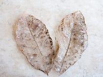 Textura seca do detalhe das folhas, foco seleto Imagem de Stock Royalty Free