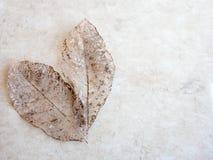 Textura seca do detalhe das folhas, foco seleto Foto de Stock Royalty Free