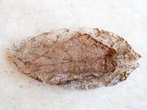 Textura seca do detalhe das folhas, foco seleto Imagem de Stock