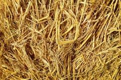 Textura seca do fundo da palha, pacotes da palha de cereal para a vaca Imagens de Stock Royalty Free