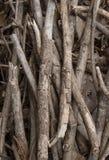 Textura seca dos ramos Fotos de Stock Royalty Free