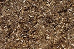 Textura secada alga marina de las algas de Posidonia Fotografía de archivo libre de regalías