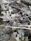 Textura secada das folhas e dos galhos Fotografia de Stock Royalty Free