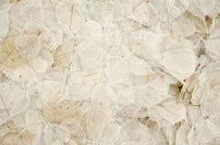 Textura secada de las hojas Foto de archivo libre de regalías