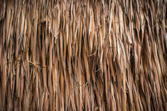 Textura secada del coco de la hoja Imagenes de archivo