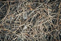 Textura secada del modelo de los palillos Imagenes de archivo