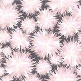 Textura sem emenda com flores brancas Foto de Stock