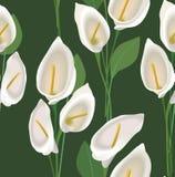 Textura sem emenda com flores cal Fotografia de Stock