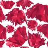 Textura sem emenda com tulip da flor Imagem de Stock Royalty Free