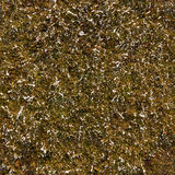 Textura sem emenda da grama do inverno Fotos de Stock