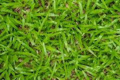 A textura sem emenda da grama verde é fresca Imagens de Stock