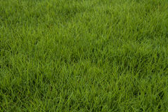 Textura sem emenda da grama verde Fotografia de Stock Royalty Free