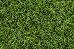 Textura sem emenda da grama verde Imagens de Stock Royalty Free