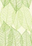 Textura sem emenda das folhas Foto de Stock