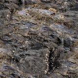 Textura sem emenda das rochas e das pedras Foto de Stock