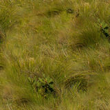 Textura sem emenda de terras da grama Foto de Stock