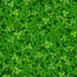 Textura sem emenda do vetor de um gramado coberto com o trevo ilustração do vetor