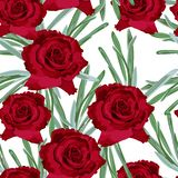 Textura sem emenda floral do teste padrão da rosa do vermelho Imagens de Stock