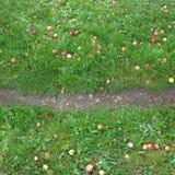 Textura sem emenda quadrada do passeio da maçã completamente Fotografia de Stock Royalty Free