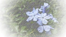 Textura suave abstracta del papel de la mora del flor del foco para el backgroun Fotos de archivo