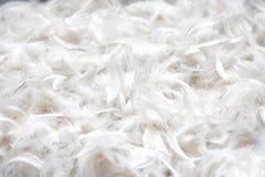 Textura suave, apacible del plumaje del pájaro para la almohada fotografía de archivo libre de regalías