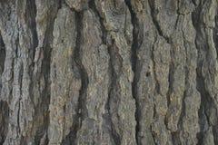Textura superficial de madera de la imagen del fondo Imagen de archivo