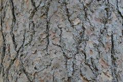 Textura superficial de madera de la imagen del fondo Fotografía de archivo libre de regalías