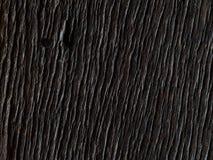 Textura superficial de madera dura del marrón oscuro Fotos de archivo libres de regalías