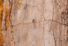 Textura superficial fósil de madera Fotos de archivo libres de regalías