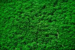 Textura superior da árvore Fotografia de Stock Royalty Free