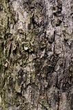 Textura tileable de Brown da árvore velha Fundo sem emenda da casca de árvore imagens de stock