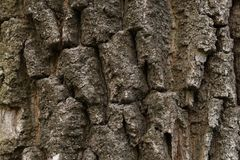 Textura tileable de Brown da ?rvore velha imagem de stock
