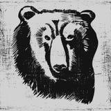 Textura tirada do grunge do esboço do urso mão principal Imagem de Stock