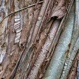 Textura tropical de la corteza de árbol, imagen de fondo tomada en la isla de Oahu fotos de archivo