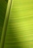 Textura tropical de la hoja Fotos de archivo