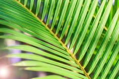 Textura tropical del fondo del verde de la hoja con la palmera Foto de archivo libre de regalías