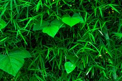 Textura tropical del fondo del verdor del latigazo foto de archivo