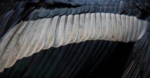 Textura tropical pintada pluma de la cigüeña del ala del pájaro Imágenes de archivo libres de regalías