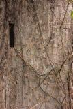 Textura urbana da parede do grunge do fundo Foto de Stock