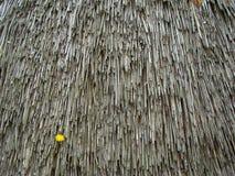 A textura velha cobre com sapê o telhado Fotos de Stock