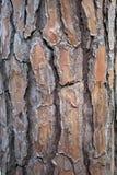 Textura velha da árvore Fotos de Stock
