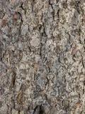 Textura velha da casca Fotos de Stock