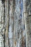 Textura velha da casca de árvore Imagem de Stock