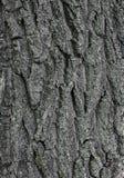 Textura velha da casca de árvore Fotos de Stock Royalty Free