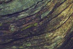 Textura velha da casca de árvore Foto de Stock
