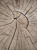 A textura velha da casca no close up Imagem de Stock