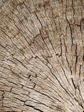 A textura velha da casca no close up Fotos de Stock Royalty Free