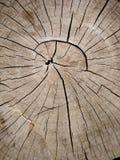 A textura velha da casca no close up Imagens de Stock Royalty Free