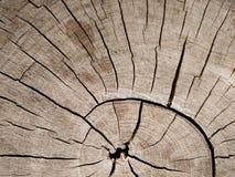 A textura velha da casca no close up Foto de Stock